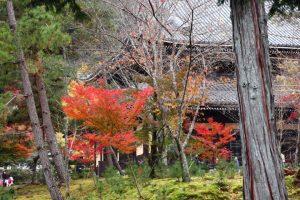紅葉の写真 Autumn leaves Photography 3365