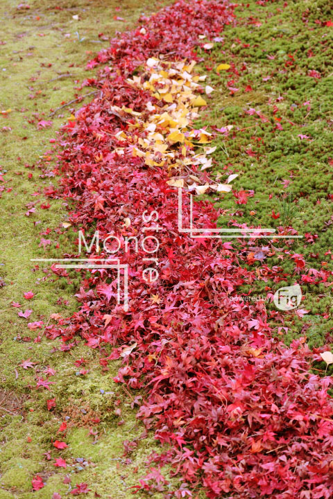 紅葉の写真 Autumn leaves Photography 3371