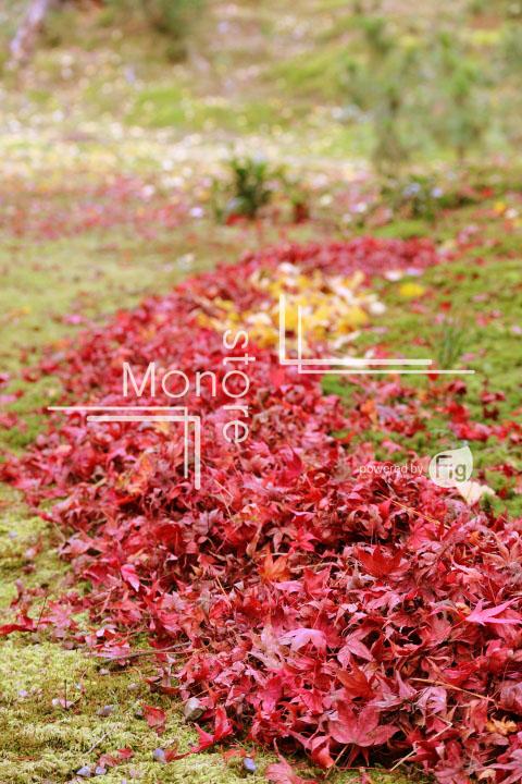 紅葉の写真 Autumn leaves Photography 3373