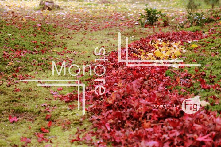 紅葉の写真 Autumn leaves Photography 3375