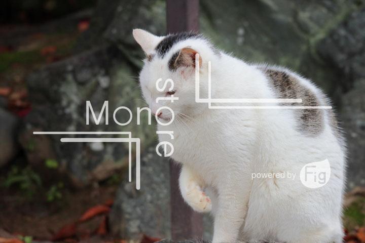 猫の写真 Cats Photography 3410