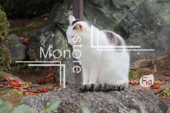 猫の写真 Cats Photography 3413