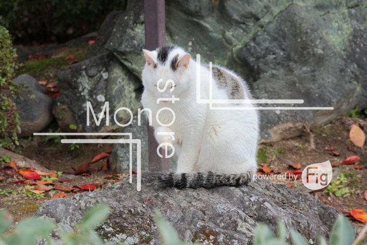 猫の写真 Cats Photography 3414