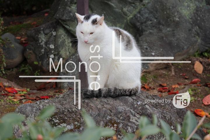 猫の写真 Cats Photography 3421