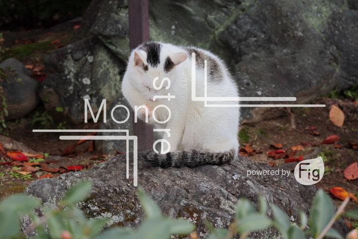 猫の写真 Cats Photography 3422