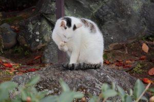 猫の写真 Cats Photography 3425