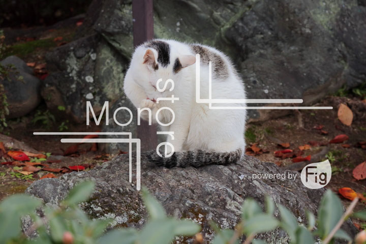猫の写真 Cats Photography 3425
