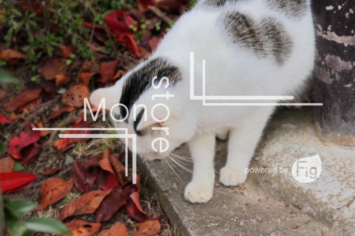 猫の写真 Cats Photography 3429
