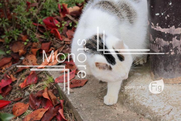 猫の写真 Cats Photography 3435