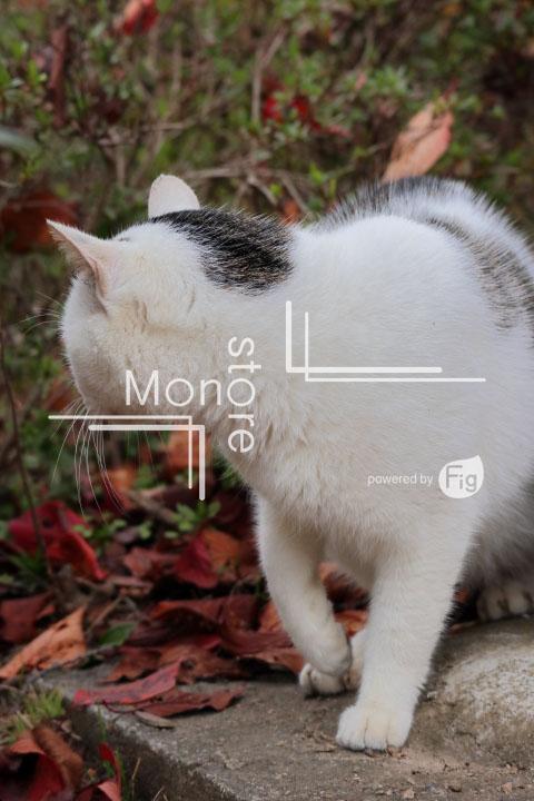 猫の写真 Cats Photography 3436
