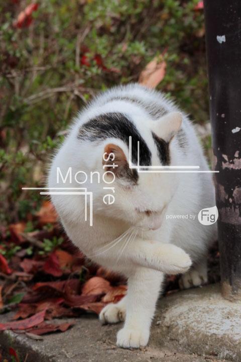 猫の写真 Cats Photography 3439