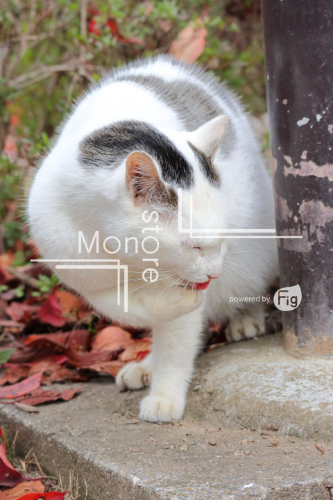 猫の写真 Cats Photography 3441