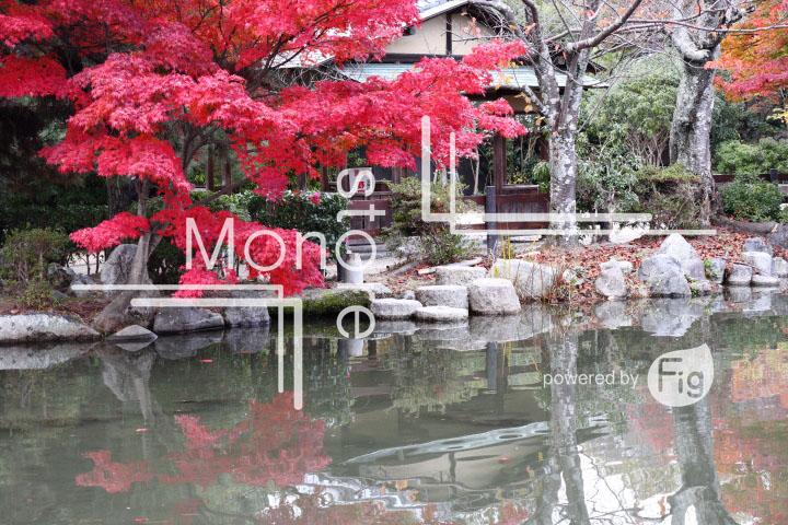 紅葉の写真 Autumn leaves Photography 3453