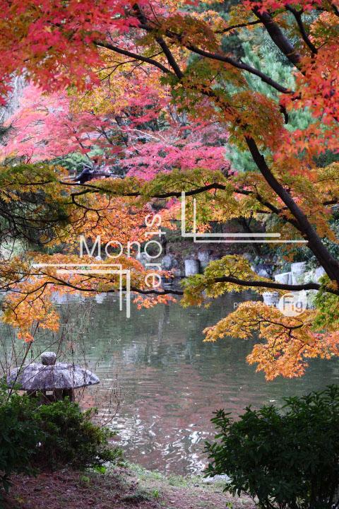 紅葉の写真 Autumn leaves Photography 3457