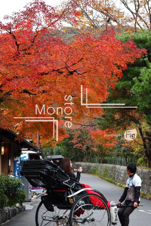 紅葉の写真 Autumn leaves Photography 3462