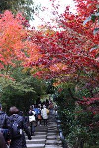 紅葉の写真 Autumn leaves Photography 3468