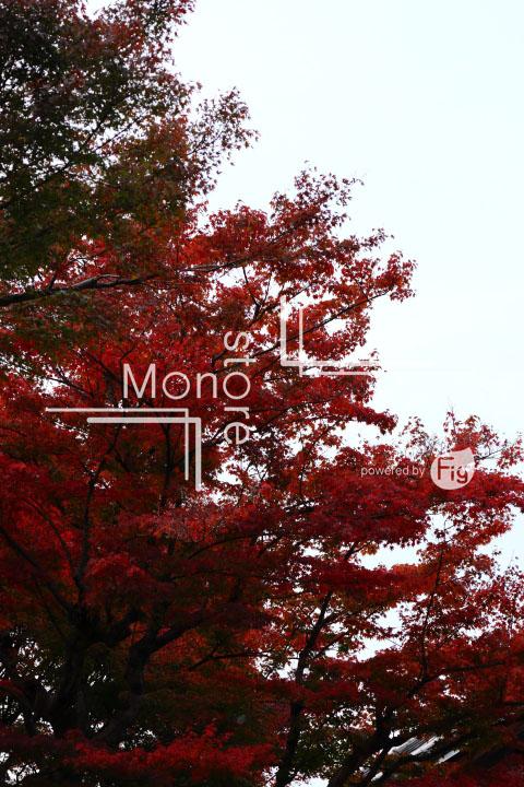 紅葉の写真 Autumn leaves Photography 3469