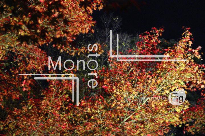紅葉の写真 Autumn leaves Photography 3473
