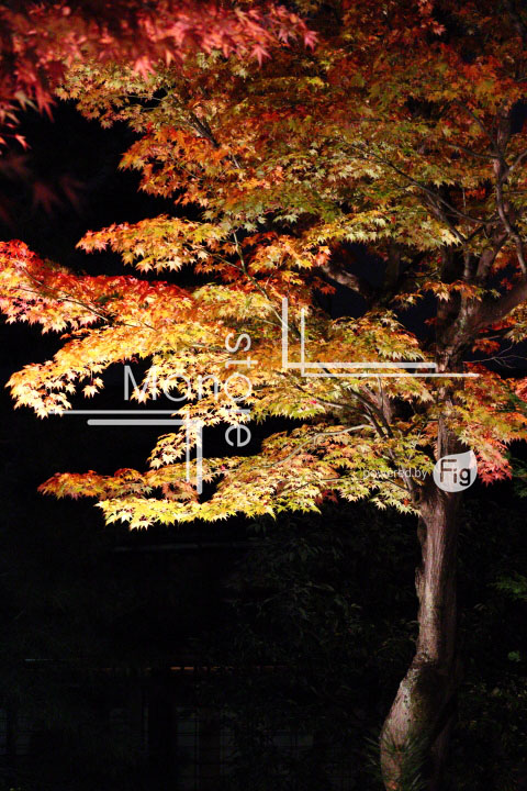 紅葉の写真 Autumn leaves Photography 3475
