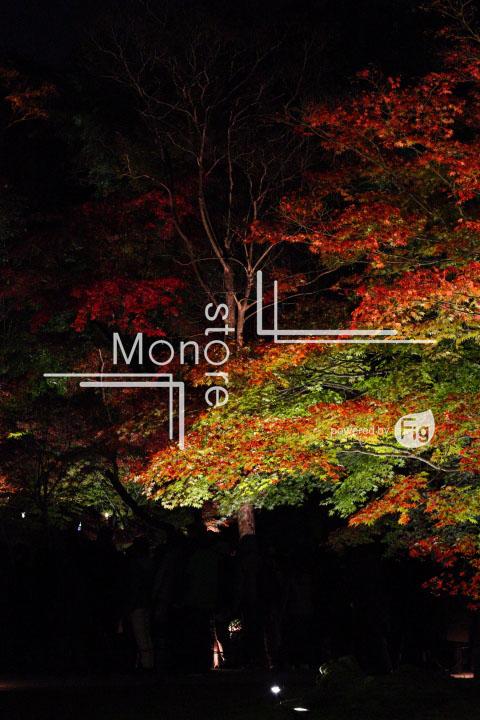 紅葉の写真 Autumn leaves Photography 3491