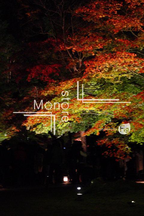 紅葉の写真 Autumn leaves Photography 3493