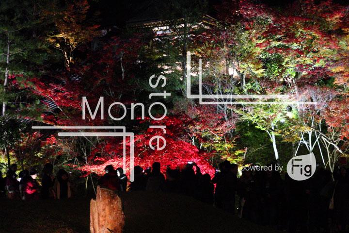 紅葉の写真 Autumn leaves Photography 3496