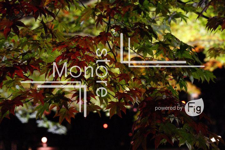 紅葉の写真 Autumn leaves Photography 3499