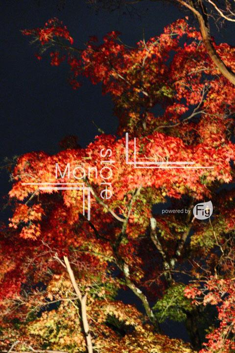 紅葉の写真 Autumn leaves Photography 3503
