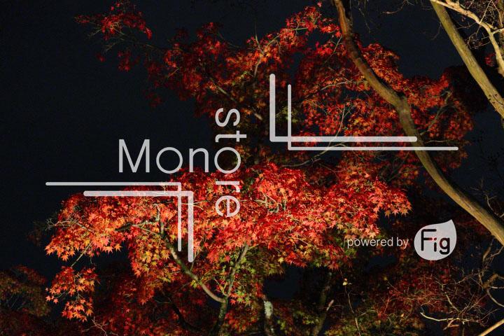 紅葉の写真 Autumn leaves Photography 3505
