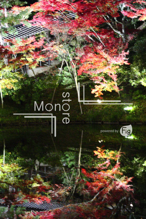 紅葉の写真 Autumn leaves Photography 3508