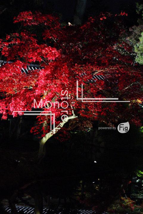 紅葉の写真 Autumn leaves Photography 3509