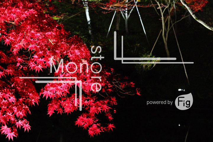 紅葉の写真 Autumn leaves Photography 3519