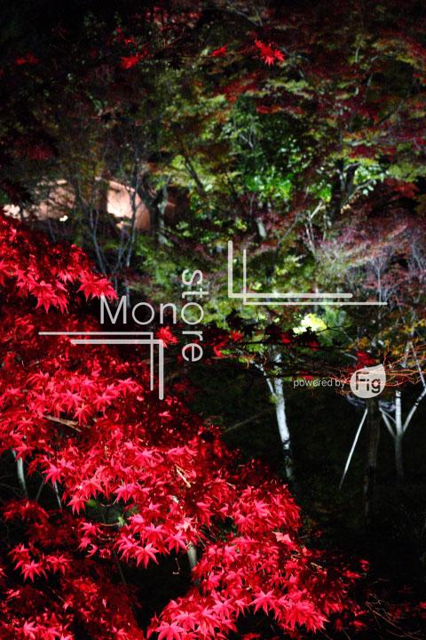 紅葉の写真 Autumn leaves Photography 3521