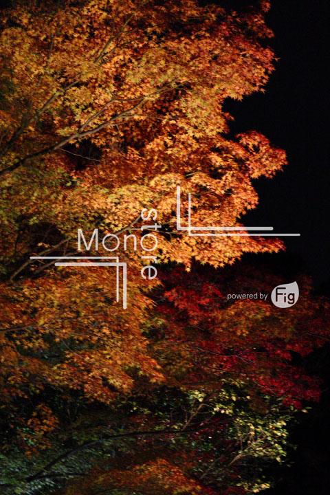 紅葉の写真 Autumn leaves Photography 3529