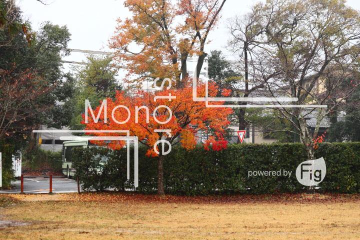 紅葉の写真 Autumn leaves Photography 3535