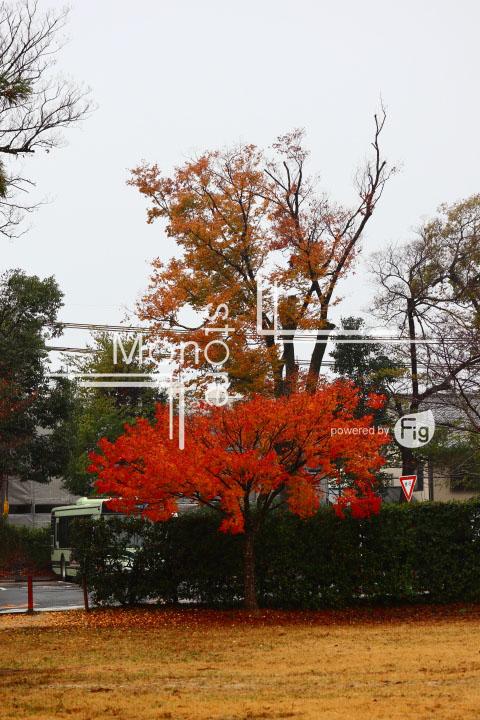 紅葉の写真 Autumn leaves Photography 3536