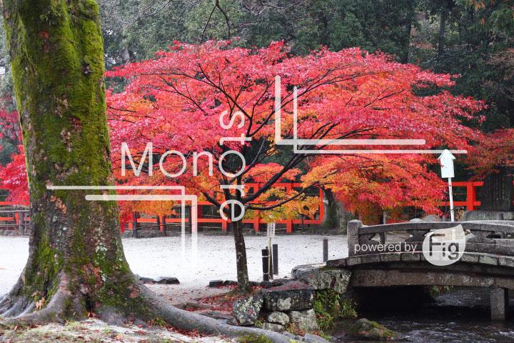 紅葉の写真 Autumn leaves Photography 3544