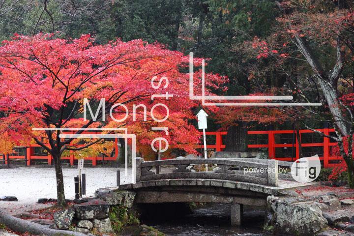 紅葉の写真 Autumn leaves Photography 3545