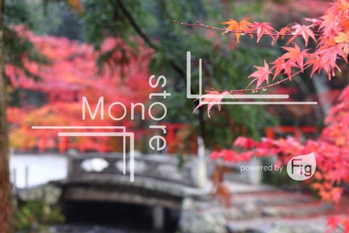 紅葉の写真 Autumn leaves Photography 3548