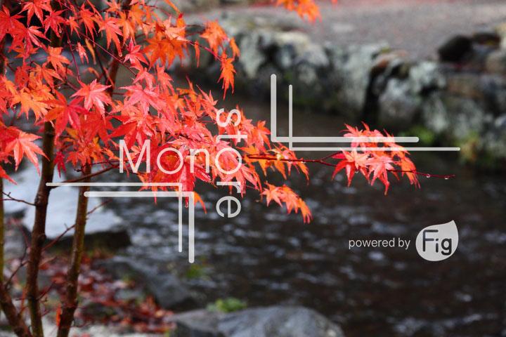 紅葉の写真 Autumn leaves Photography 3549