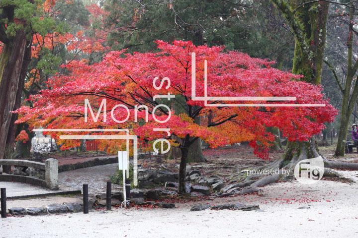 紅葉の写真 Autumn leaves Photography 3556