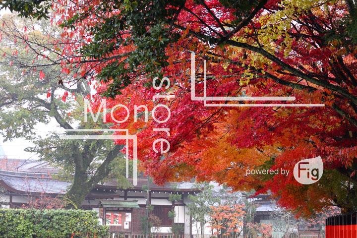 紅葉の写真 Autumn leaves Photography 3567