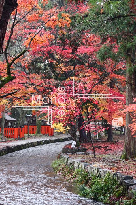 紅葉の写真 Autumn leaves Photography 3575