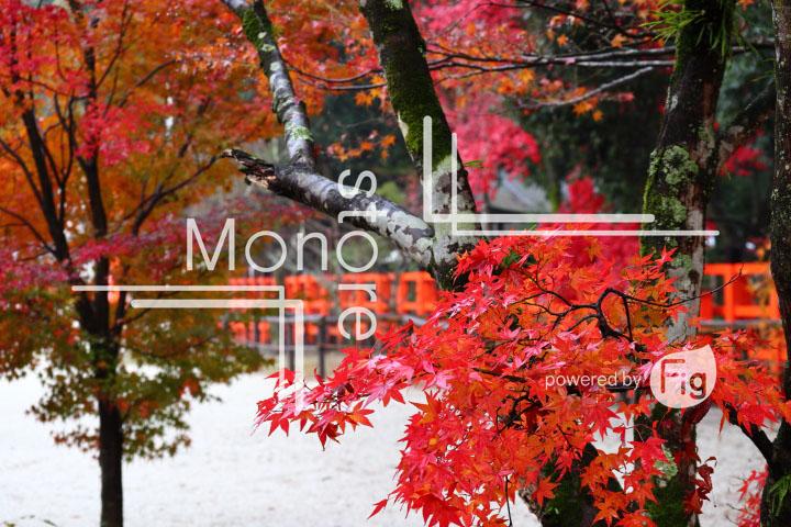 紅葉の写真 Autumn leaves Photography 3576