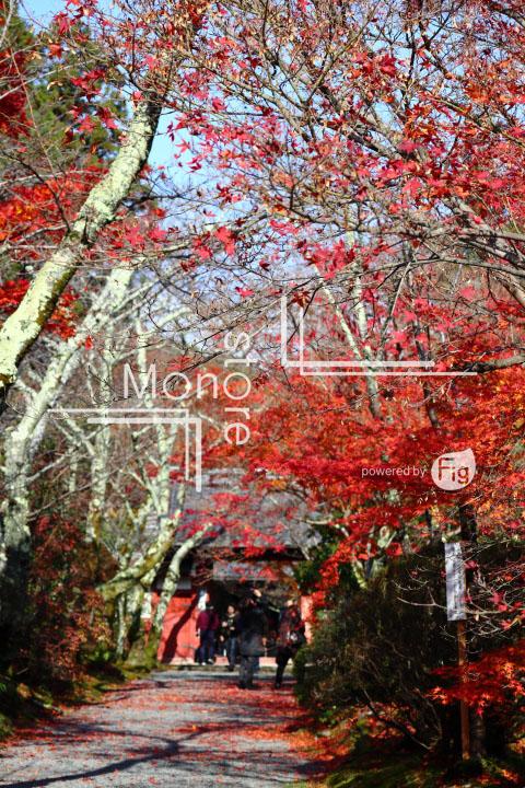 紅葉の写真 Autumn leaves Photography 3579
