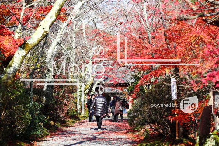 紅葉の写真 Autumn leaves Photography 3580