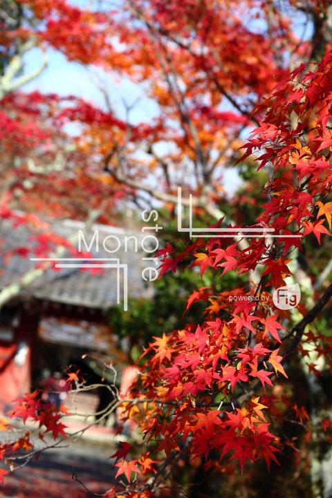 紅葉の写真 Autumn leaves Photography 3585