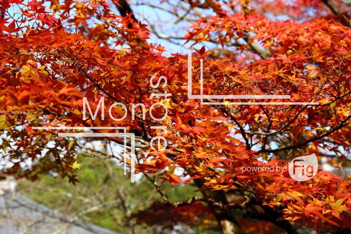 紅葉の写真 Autumn leaves Photography 3587