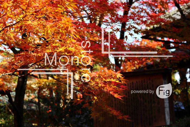 紅葉の写真 Autumn leaves Photography 3588