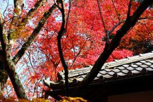 紅葉の写真 Autumn leaves Photography 3592